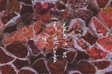 亚洲最大——昆明斗南花卉市场