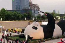 都江堰仰天窝广场 最大熊猫亮相