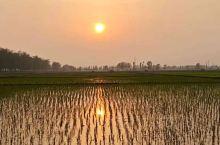 夕阳照在蟹稻田上