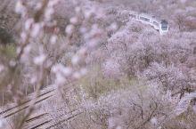 北京追花攻略 开往春天的列车