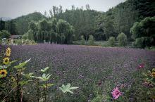 北京密云人间花海可以住在花丛中、美不胜收