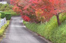 苗秀寺的红叶风光!