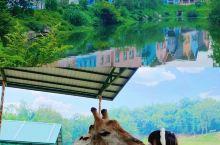 重庆最大的动物小镇🍃彩色童话乐园超好玩
