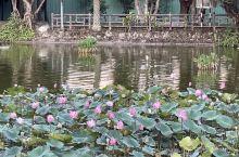 翠湖公園內漂亮的荷花 #抓住夏天的尾巴 #旅行拍照技术流 #遛娃好去处