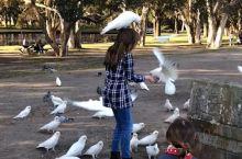 鸟的地头,鸟做主哈   哈哈哈