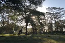 肯尼亚|《走出非洲》取景地——奈瓦沙湖