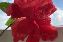 蓝天白云红花。