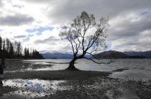 瓦纳卡孤独的树