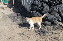 农村里的小动物也挺有意思,在这样的环境里,生活的无忧无虑。