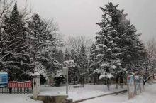 雪     地