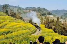 穿越花海的蒸汽小火车