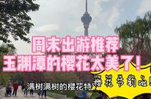 北京樱花节来了,玉渊潭的樱花超级美