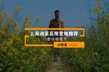 上海油菜花 | 惠南居然隐藏一片花田秘境