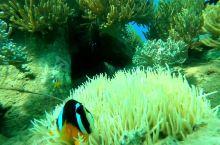 芽庄出海潜水