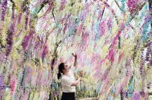 樱花开了,很美,汉服旗袍配樱花,美美哒