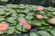 红菏湿地公园