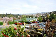 达尼丁-透着苏格兰风情的新西兰城市