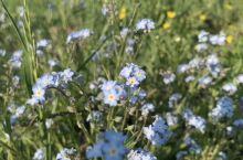 北沟鲜花盛开