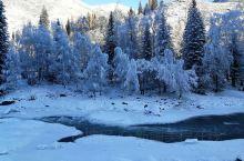 冬日野嗨 喀纳斯踏雪 寻找雪蘑菇