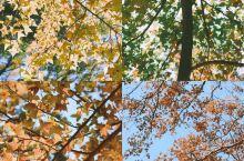 广州看枫叶 从化石门国家森林公园