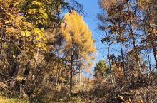 北方树叶黄了,然而……