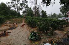 在龙州八角乡后山茶的茶园,正在下雨,音乐电影MV《龙州媚》的拍摄只能停下来,美女们只能躲在木棚里等待