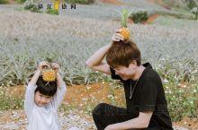 湛江徐闻|菠萝的海,这里空气都是菠萝味!