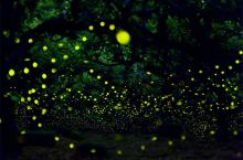日本冈山县成了萤火虫的世界·这不就是童话
