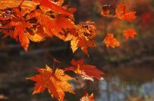 秋风起秋意浓