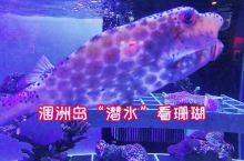 """涠洲岛""""潜水""""看珊瑚"""