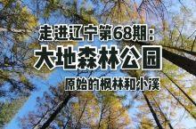 走进辽宁第68期:大地森林公园。