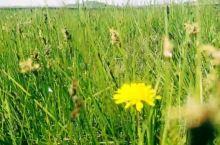 欢乐草原行—乌兰布统大草原