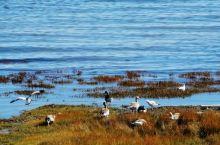 青海湖是著名景点,有名的高原湖泊。可在西宁市内参加青海湖一日游,早上市内乘车点乘车前往,途中给过神秘