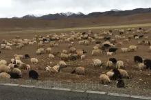 西藏阿里路上的小可爱们