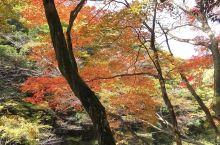 奥津溪的红叶美景!