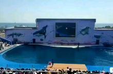 圣蓝海洋公园海豚表演