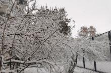 凤凰山雪景!