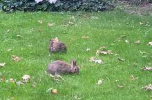 城市里的野兔