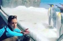 """""""休假""""期间,黄金海岸海洋世界 (Sea World) 的明星海狮 Birri 在海洋馆里开始了它的"""