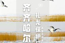 齐齐哈尔丨丹顶鹤的故乡,我在扎龙保护区。