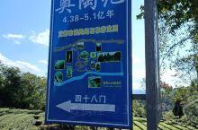 云南太远,来宜昌市奥陶纪石林风景区!