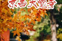 北京|大觉寺|秋景盎然,银杏红枫齐盛