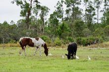 从明天起,做一个幸福的人,归马,放牛,周游世界, 从明天起,关心粮食和蔬菜,乐事田园,春桃花开。