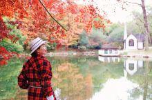 走进油画森林—上海共青森林公园私藏打卡点