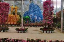 打卡英山四季花海,15000平米的玻璃花房,圆你一年四季花痴梦