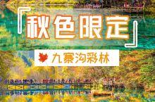 色彩王国九寨沟,彩林最佳观赏期