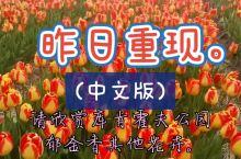 [库肯霍夫公园]郁金香,花卉,花田,风车