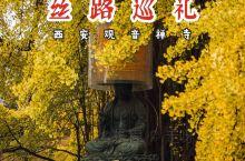丝路巡礼|终南山下赏唐太宗亲种千年古银杏