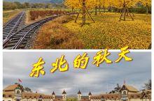 东北金秋银杏黄,丹东叆河好风光