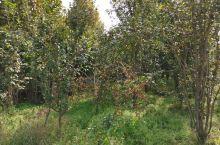 秋天的林场